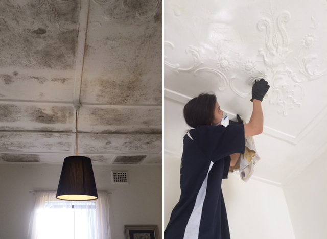 Mould Cleaning Sydney